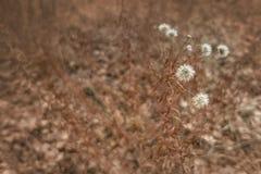 Εξασθενισμένο φθινόπωρο υπόβαθρο λουλουδιών στοκ φωτογραφίες