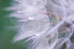 εξασθενισμένο φυτό στοκ εικόνες