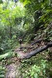 Εξερευνήστε το τροπικό δάσος Στοκ Εικόνες