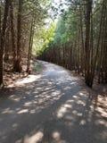 εξερεύνηση του δάσους στοκ φωτογραφία