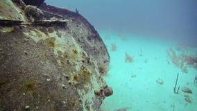 Εξερεύνηση υποβρύχια στο SAN Andres Κολομβία φιλμ μικρού μήκους