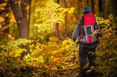 Εξερεύνηση φυλλώματος φθινοπώρου στοκ φωτογραφία με δικαίωμα ελεύθερης χρήσης