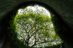 Εξετάστε πέρα από τα δέντρα το κέντρο του κονσερβοποιώντας πάρκου οχυρών, Σινγκαπούρη Στοκ φωτογραφίες με δικαίωμα ελεύθερης χρήσης