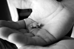 εξευγενίστε τα χέρια Στοκ Εικόνα