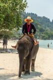 Εξημερωμένος ελέφαντας μωρών Koh Chang στοκ εικόνες