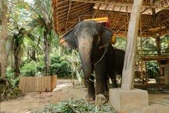 Εξημερωμένος ελέφαντας που στέκεται με την κίτρινη σέλα στοκ φωτογραφία