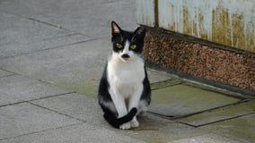 Εξοικειωμένη γάτα; στοκ εικόνα