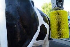 Εξοπλισμός για τις αγελάδες και το πρότυπο μιας αγελάδας Στοκ Εικόνες