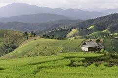 Εξοχικό σπίτι στους τομείς ρυζιού όμορφους σε Chiangmai Στοκ Φωτογραφία