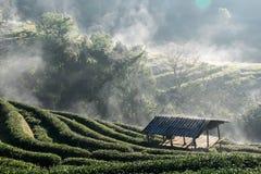 Εξοχικό σπίτι στο αγρόκτημα τσαγιού στοκ εικόνες