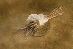 Εξωθήστε και σίτος στο χρυσό στοκ εικόνες