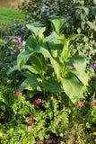 Εξωραϊσμένος μεθύστακας κήπος Στοκ εικόνες με δικαίωμα ελεύθερης χρήσης
