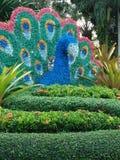 Εξωραϊσμός Peacock στοκ εικόνες
