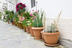 Εξωτερική διακόσμηση των λουλουδιών και των δοχείων στο ελληνικό ύφος Στοκ Εικόνες
