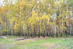Εξωτερικό ξύλο Στοκ Εικόνες