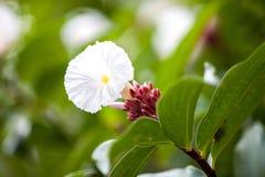 Εξωτικά ζωηρόχρωμα λουλούδια στο θάμνο με πολλά πράσινα φύλλα στοκ εικόνα