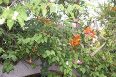 Εξωτικά λουλούδια από την Κούβα Στοκ Εικόνες