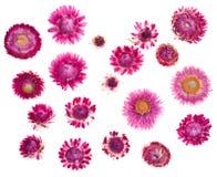 εξωτικά λουλούδια Στοκ φωτογραφία με δικαίωμα ελεύθερης χρήσης