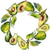 Εξωτικά πράσινα άγρια φρούτα αβοκάντο σε ένα πλαίσιο ύφους watercolor ελεύθερη απεικόνιση δικαιώματος