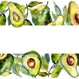 Εξωτικά πράσινα άγρια φρούτα αβοκάντο σε ένα πλαίσιο ύφους watercolor διανυσματική απεικόνιση