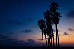 Εξωτικά τροπικά δέντρα με τον καταπληκτικό νεφελώδη ουρανό στοκ εικόνες με δικαίωμα ελεύθερης χρήσης