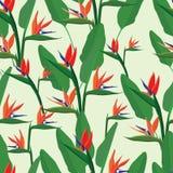 Εξωτικά τροπικά λουλούδια συλλογή strelizia ελεύθερη απεικόνιση δικαιώματος