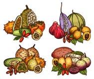 Εξωτικά φρούτα και μούρο του τροπικού σκίτσου δέντρων ελεύθερη απεικόνιση δικαιώματος