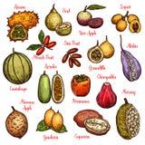 Εξωτικά φρούτα και τροπικά μούρα ελεύθερη απεικόνιση δικαιώματος