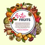 Εξωτικά φρούτα και τροπικό πλαίσιο μούρων ελεύθερη απεικόνιση δικαιώματος