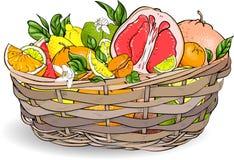 Εξωτικά φρούτα στο ψάθινο καλάθι απεικόνιση αποθεμάτων