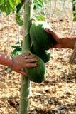 Εξωτικά φρούτα στο santo Domingo: φίλοι στοκ εικόνες με δικαίωμα ελεύθερης χρήσης