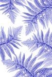 Εξωτικά φυτά, μπλε υπόβαθρο φύλλων φτερών Στοκ φωτογραφία με δικαίωμα ελεύθερης χρήσης