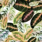Εξωτικά φύλλα - Morant Εικόνα υποβάθρου Watercolor - διακοσμητική σύνθεση Έντυπα χρήση υλικά, σημάδια, στοιχεία, ιστοχώροι, χάρτε Στοκ φωτογραφία με δικαίωμα ελεύθερης χρήσης