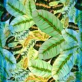 Εξωτικά φύλλα - Morant Εικόνα υποβάθρου Watercolor - διακοσμητική σύνθεση Στοκ Φωτογραφία