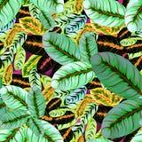 Εξωτικά φύλλα - Morant πρότυπο άνευ ραφής Εικόνα υποβάθρου Watercolor - διακοσμητική σύνθεση Στοκ Εικόνες