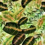 Εξωτικά φύλλα - Morant πρότυπο άνευ ραφής Εικόνα υποβάθρου Watercolor - διακοσμητική σύνθεση Στοκ Φωτογραφίες