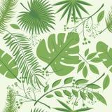 Εξωτικά φύλλα, άνευ ραφής ρεαλιστικό τροπικό σχέδιο φύλλων τροπικών δασών Φύλλο φοινικών, φύλλο μπανανών, hibiscus, λουλούδια plu Στοκ Εικόνες