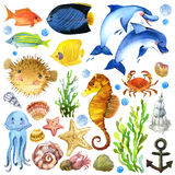 Εξωτικά ψάρια, κοραλλιογενής ύφαλος, άλγη απεικόνιση αποθεμάτων