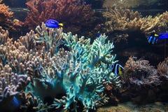 Εξωτικά ψάρια κοραλλιών Στοκ Εικόνα