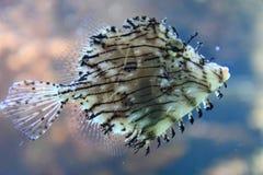 Εξωτικά ψάρια κοραλλιών Στοκ εικόνες με δικαίωμα ελεύθερης χρήσης