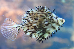 Εξωτικά ψάρια κοραλλιών Στοκ Φωτογραφίες