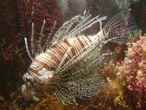 εξωτικά ψάρια Στοκ Εικόνες