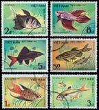 εξωτικά ψάρια Στοκ φωτογραφία με δικαίωμα ελεύθερης χρήσης