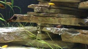 εξωτικά ψάρια απόθεμα βίντεο
