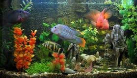 εξωτικά ψάρια Στοκ φωτογραφίες με δικαίωμα ελεύθερης χρήσης