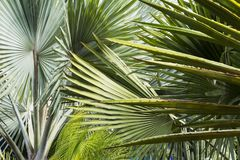 Εξωτικές εγκαταστάσεις στους κήπους στο Μαρακές στο Μαρόκο στοκ εικόνες με δικαίωμα ελεύθερης χρήσης