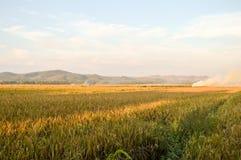 Εξωτική άποψη των τομέων ρυζιού Στοκ φωτογραφία με δικαίωμα ελεύθερης χρήσης
