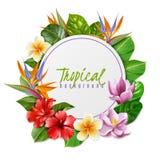 Εξωτική απεικόνιση πλαισίων λουλουδιών Raelistic απεικόνιση αποθεμάτων