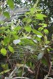 Εξωτική βλάστηση από την Κούβα Στοκ φωτογραφία με δικαίωμα ελεύθερης χρήσης