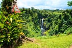 Εξωτική δασική επιφυλακή ζουγκλών, άγρια βλάστηση και τροπικό δέντρο στοκ εικόνες